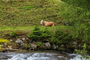 Wanderweg Wilde Wassser und Riesach-Wasserfall, Kuh