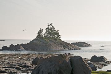arbre sur rocher
