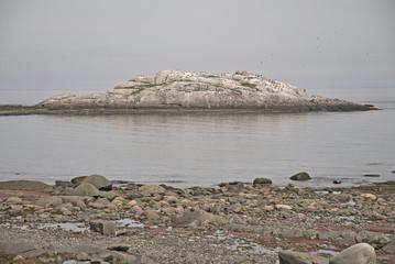 Oiseau sur rocher dans l'eau