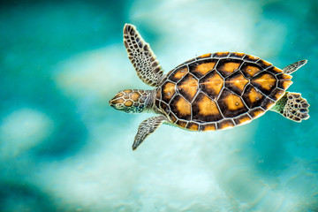 Photo sur Aluminium Tortue Close up of cute turtle