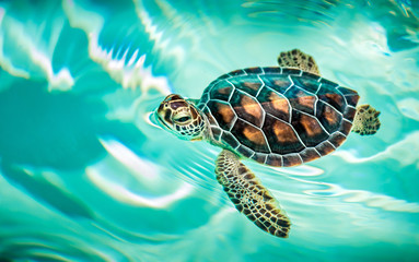 Close up of cute turtle