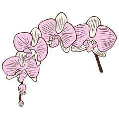 Drawing orchid flower stock illustration