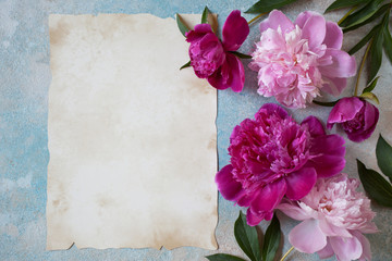 Peonies pink on a background for congratulations and paper for text