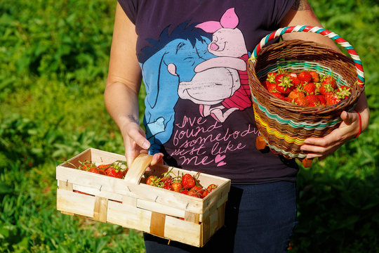 girl carrying baskets full of fresh strawberies from a field.