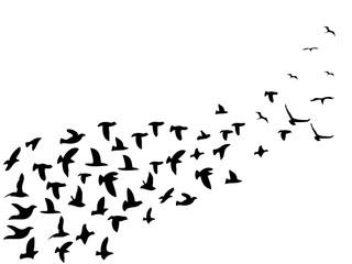 black flock birds flying background