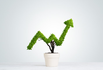 Obraz Concept of investment income and growth with tree in pot - fototapety do salonu