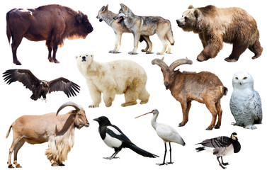 european animals isolated