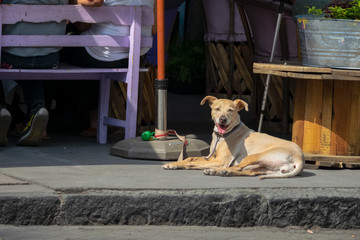 Dog in the historic center of the Tlalpan neighborhood, south of Mexico City