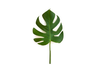 Tropical leaf monstera on a white background. Top view, flat lay.