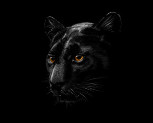 Head of a black panther