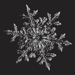 This vector illustration based on macro photo of real snowflake: small stellar dendrite snow crystal with fine hexagonal symmetry, complex ornate shape and six long, elegant arms with side branches.