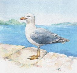Watercolor seagull on the blue sea background.