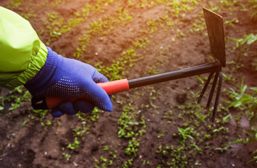 Agricultural photo of a gardener hand in green jacket holding metal hoe tool on ground with sprouts background.