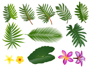 Tropical leaves set. Vector clip art illustration with simple gradients.