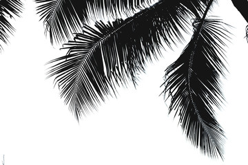 Black silhouette of coconut leaves