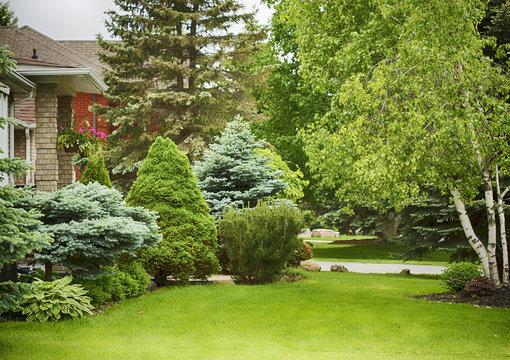 Home garden in summer time.