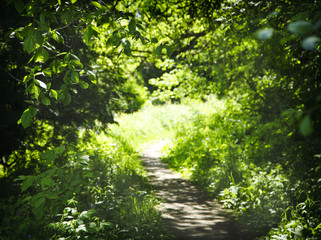 Walkway path with green trees in forest. Way through summer forest.