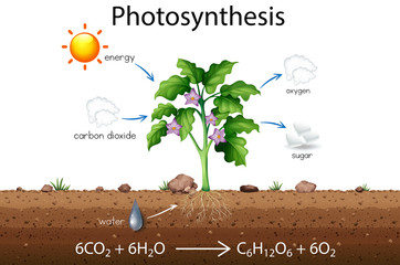 Photosynthesis explanation science diagram
