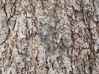 Tree surface, tree trunk background