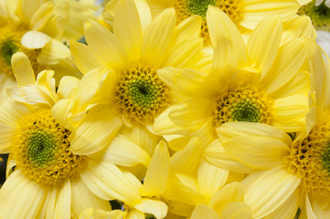 yellow asters flowers background