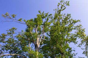 Nice tree crown with blue sky, Czech landscape