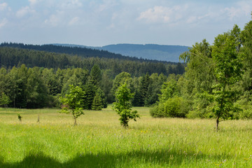 Nice Czech landscape in Novohradske mountain with meadow