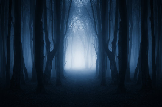 magical forest path, surreal landscape