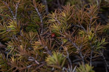 Coccinella nel bosco
