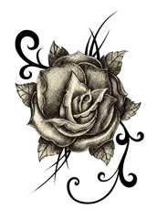Art Design Rose Tattoo. Hand pencil drawing on paper.