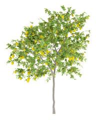 lemon tree with lemons isolated on white background