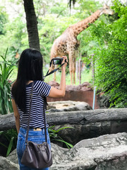 Young woman asia taking a photo of giraffe at zoo.