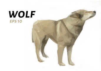Wolf of triangles. Low poly wolf. Vector illustration.