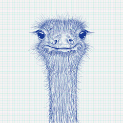 Ostrich sketch. Head closeup on lined paper background
