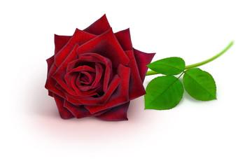 Blumen 931