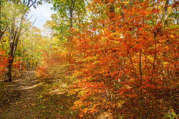 autumn forest, all the foliage is painted with golden color in the middle of the forest road.
