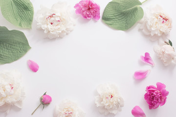 pink and white peonies on white background