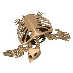 The skeleton of a prehistoric turtle isolated on white background. Vector illustration.
