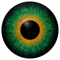 Deurstickers Iris Green and orange eye texture with black fringe and white background