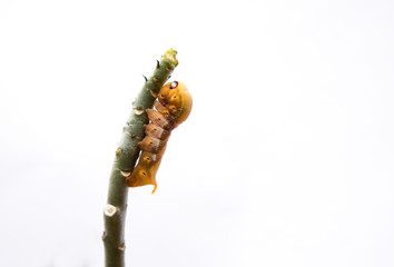 The worm on a branch