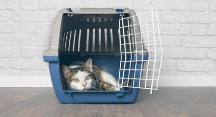 Old tabby cat lies in a travel crate.