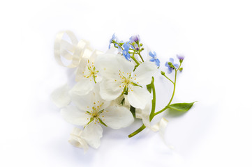white flowers of apple tree and forget me nots on white background