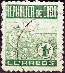 Tobacco plantations on very old cuban postage stamp