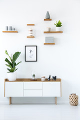 Poster above wooden cupboard with plant in minimal white apartment interior. Real photo