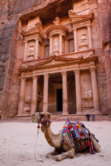 Camel in front of Treasury Building in Petra in Jordan