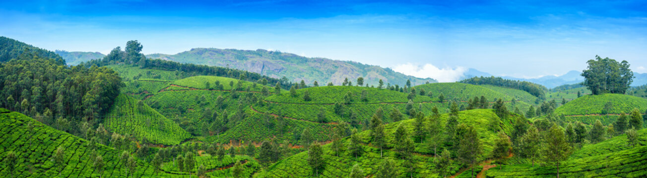 Panoramic beautiful tea plantations in hills near Munnar, Kerala, India.