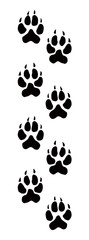 Traces of a bear. Vector drawing