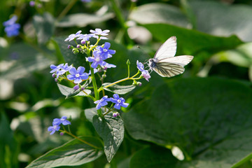 butterfly sitting on meadow violet flower