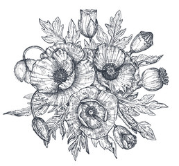 Vector floral composition of hand drawn poppy flowers