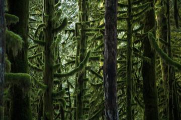 Mossy Trees