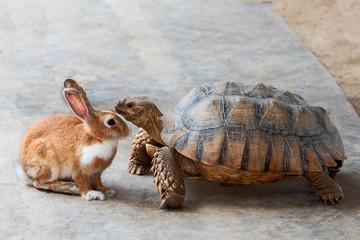 Fotorolgordijn Schildpad rabbit and turtle..